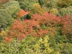 Autumn colours in the valley