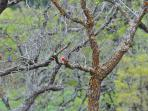 We have lots of birds, including this Vermillion flycatcher.