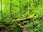 Ancient welsh rainforest surrounds the area