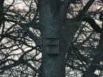 An owl nesting in one of the numerous owl boxes in the area