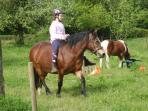 Ces deux poneys adorent les enfants et attendent les vôtres !