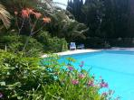 Swimming pool surrounded by a lovely garden