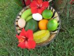 Some of the bounty we provide to our guests, fruit and eggs.