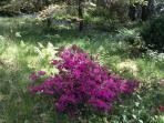 Our woodland wild garden
