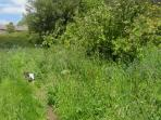 Our Orchard with Tula the dog