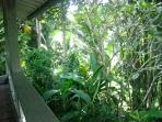 Jungle View from bedroom verandah