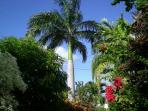 favourite palm tree