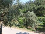Gardens and olive trees