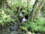 Tumbling waterfalls and picturesque fairy dells on Maesydderwen