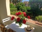 Terrasse du rez-de-chaussée : 2 oliviers bicentenaires dans le jardin