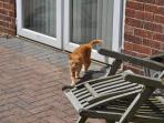 Biscuit the family cat that loves to meet holiday makers