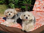 Pets welcomed! Our two little Morkies will love to welcome you and your furry friends!