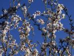 Primavera en Casa Rural la Robliza