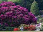 Rhododendrons at Castle Kennedy Gardens