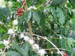 Located on 100% Kona Coffee Estate Farm