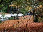 Autumn at the Kokedera Temple, aka Moss Temple (Unesco site)