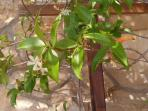holiday in May and June blessed with  smell of jasmine