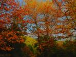 Castagni in autunno a Pietralata