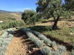 Laquebrilla Herb Farm Project