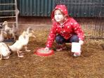 The most popular activity is feeding the animals with farmer Phil in the morning.