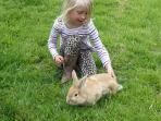 Scruffles the bunny is lead trained so children can take him for a walk.