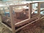 Our new indoor petting area