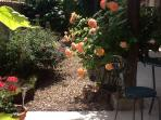 The courtyard in June, full of herbs and flowers.