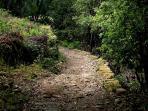 Le chemin qui mène à la rivière depuis la maison.