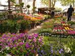 Le marché aux fleurs au bout de la rue sur le Boulevard Béranger