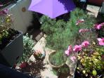 joli patio ombragé très calme