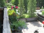 Your Summer Garden