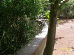 Creque Dam in Rain Forest