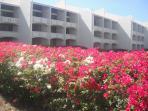 Spring flowers around Condos