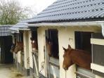Nos amis les chevaux sont les bienvenus
