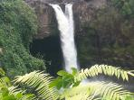 Rainbow falls in Hilo