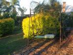 Swing in back garden at sunset