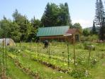 Huge gardens near our barn.