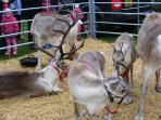 Santa's reindeer always pay Strathaven a visit in December