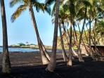 Punalu'u's black sand beach is rimmed with palm trees - if you need shade, they're standing by.