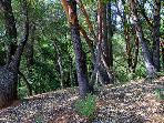Black Mountain, Forested Property with hiking trail.