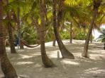 Beach coconut trees