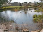 Medmerry Park duck pond