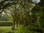 Walled garden tree tunnel