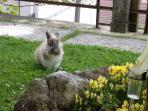 animali domestici in giardino