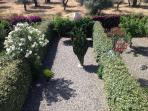 privat mature gardens   taken from balcony   olive grove on back ground