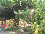 et des rhododendrons sous les roses