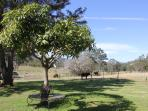 We are a working farm with a small stud herd of cattle that room freely in surrounding paddocks.