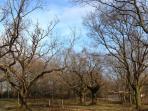 Nos vieux chênes centenaires d'Espeletenia - Hiver