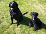 Golly and Coco will give you a warm welcome. If you are not into dogs please let us know.