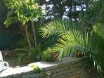 particolare giardino, come avvolti dal verde...